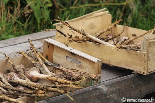 En direct du potager nomadescence - Recolte de l ail ...