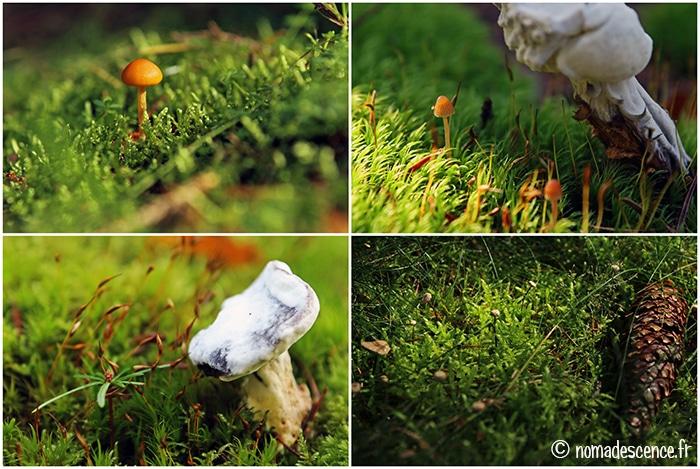 Mousses et champignons