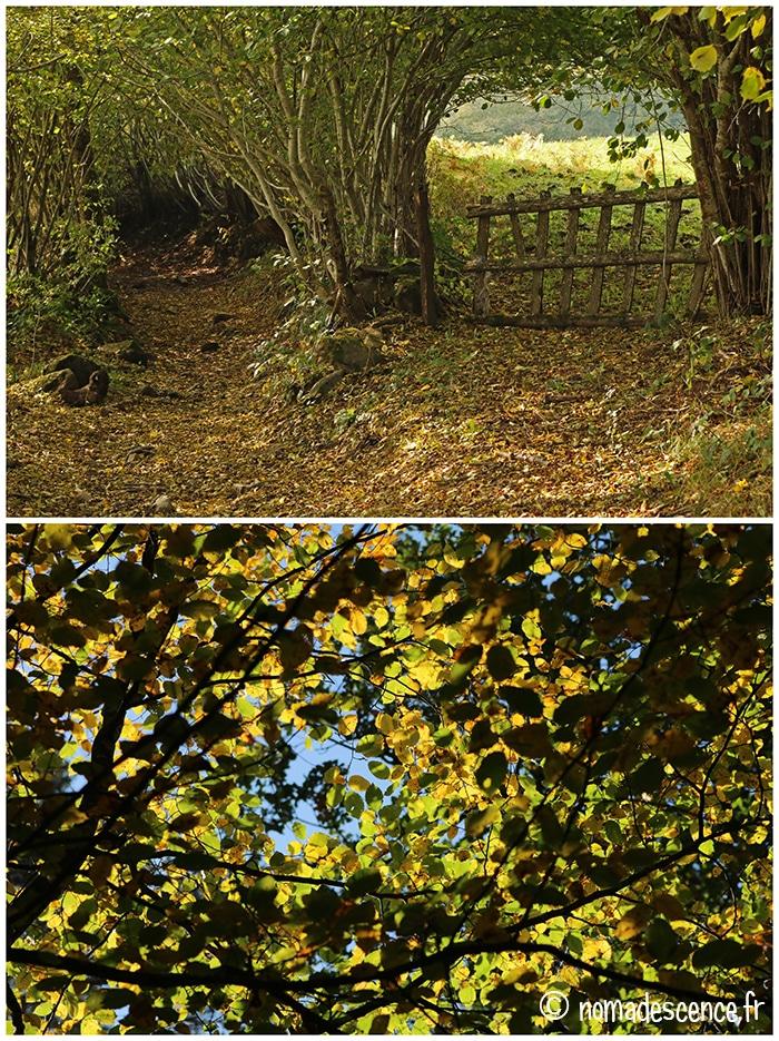 Passage et feuilles