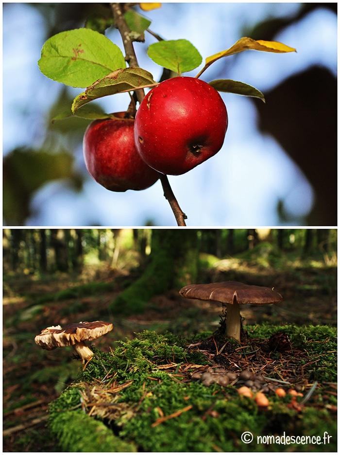 Pommes et champignons