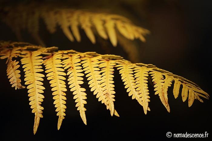 Balades d'automne en Morvan