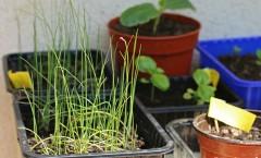 Mon Potager - Les semis