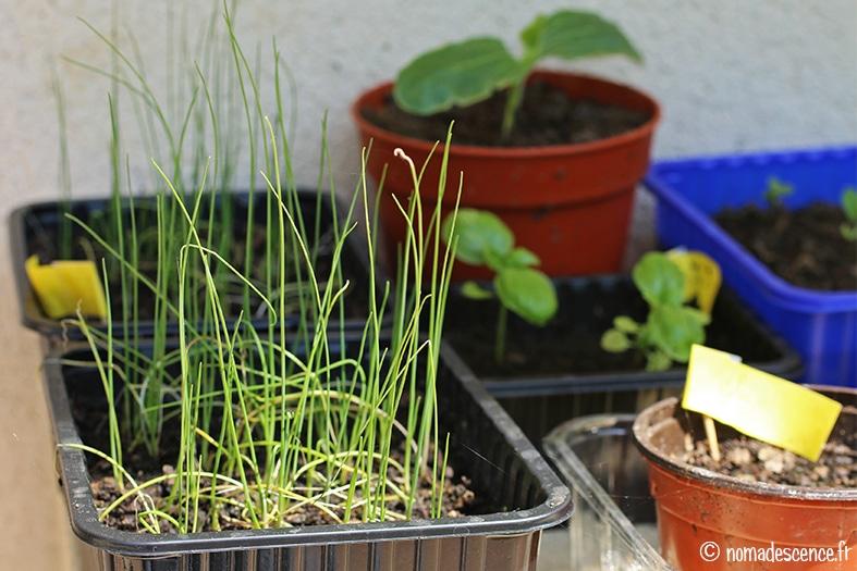 Mon Potager – Les semis